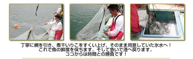 いりこ漁の様子