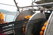 漁の風景05